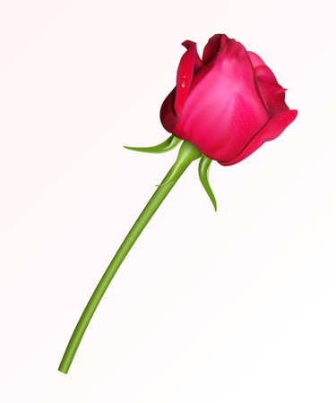rosebud: A single red rose on a white background Illustration