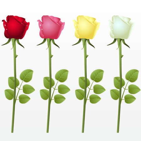 Set from four roses on a white background Illustration