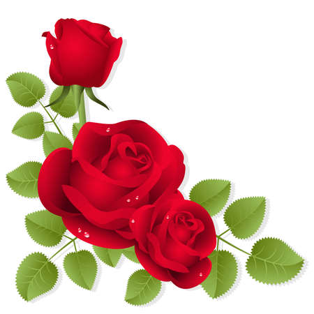 Three red roses on a white background Stock Vector - 4231144