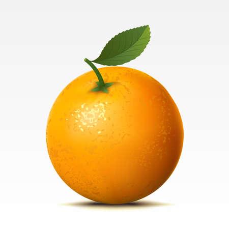 fruitage: Orange on a white background Illustration