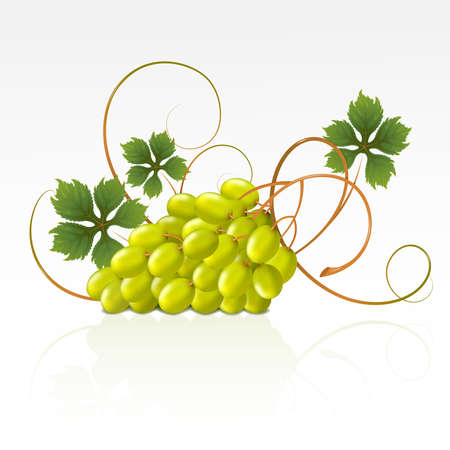 Grapes with green leaves on a white background