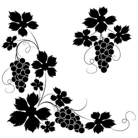 tendrils: Decorative elements from the vine on a white background Illustration