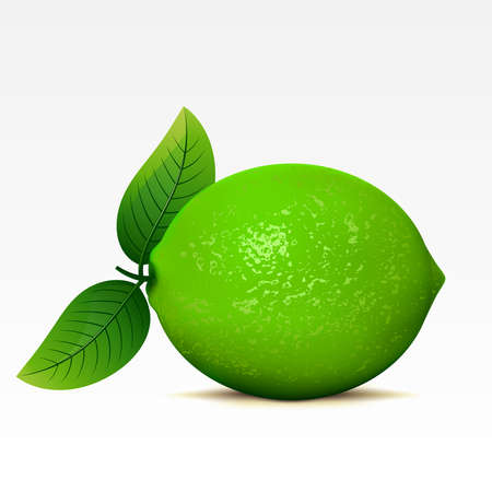 fruited: Lime on a white background