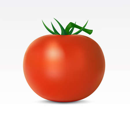 Tomato on a white background Vector