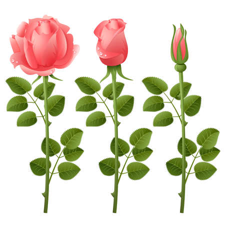Three pink roses on a white background Stock Vector - 5021548
