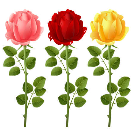 green and yellow: Three roses on a white background Illustration