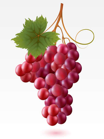 grapes on vine: Red grapes with green leaf on a white background