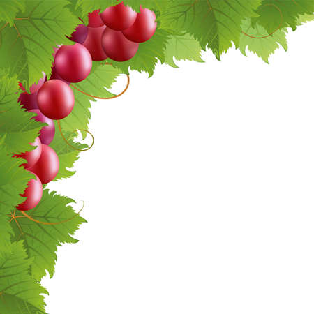 purple grapes: Red vine on a white background. Mask. Illustration