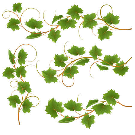 tendrils: Set from vine on a white background