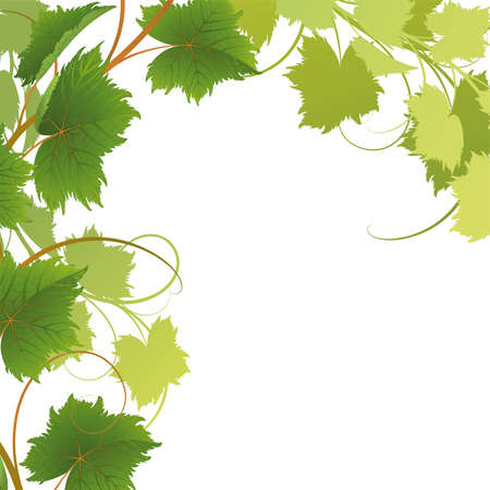 grapes on vine: Vine on a white background Mask