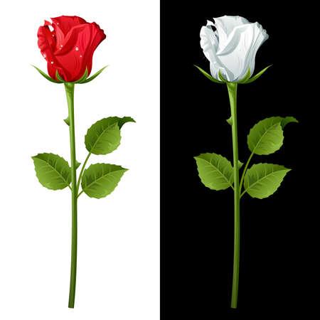 빨간색과 흰색 장미에서 설정합니다.