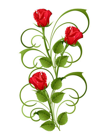 rose stem: Three red roses on a white background