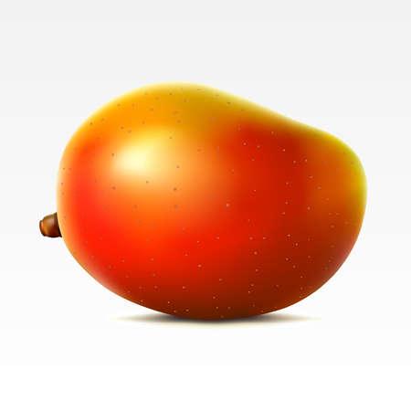 fruited: Mango on a white background Illustration