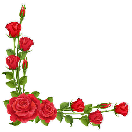 rosebuds: White background with red roses   Illustration