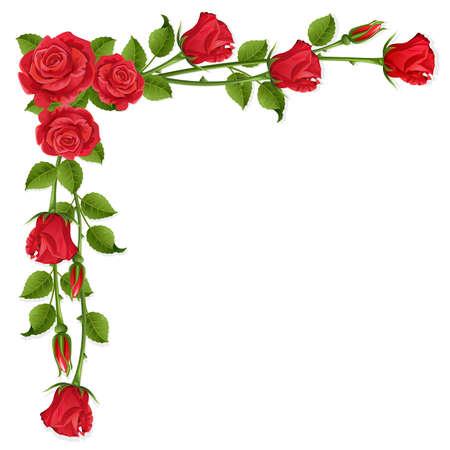 빨간 장미와 흰색 배경