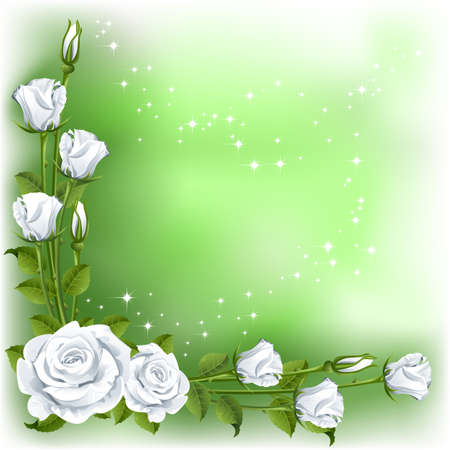 rosebuds: Green background with white roses   Illustration