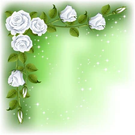 rosebud: Green background with white roses   Illustration