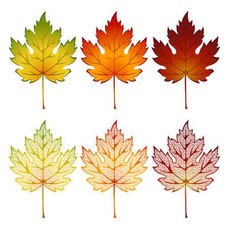Set van esdoorn bladeren van verschillende kleuren Vector Illustratie