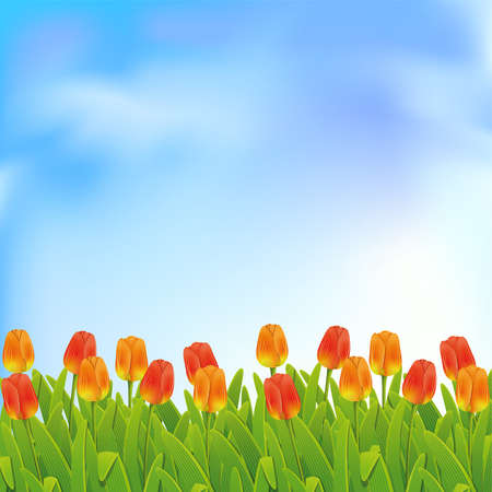 herbaceous border: Spring background with blue sky and tulips. Clipping Mask