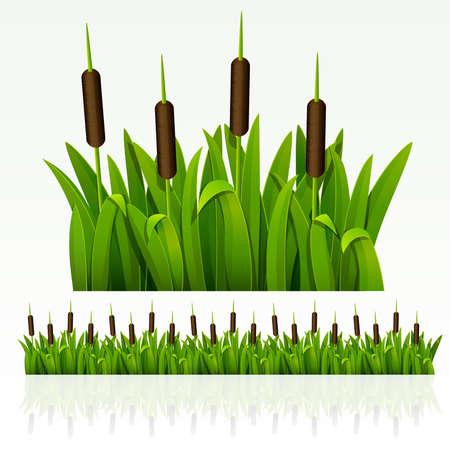 canne: Bordo verde erba da reed (pu� essere ripetuta e scalato in qualsiasi dimensione)