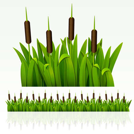 sedge: Grass green border from reed (can be repeated and scaled in any size)