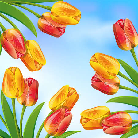 tulips in green grass: Spring background with blue sky and tulips