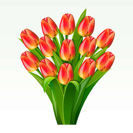 Bouquet from red tulips on on a white background Stock Vector - 8756281