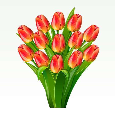 spring out: Ramo de tulipanes rojos sobre un fondo blanco Vectores