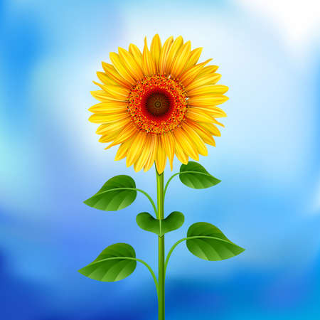 Yellow sunflower on the blue background  Mesh. Vector