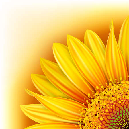 Background with half of the  yellow sunflower. Mesh. Clipping Mask