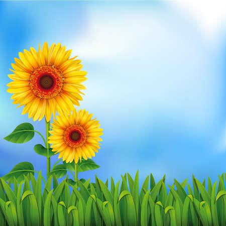 yellow sky: Two yellow sunflowers on the blue background  Mesh. Clipping Mask