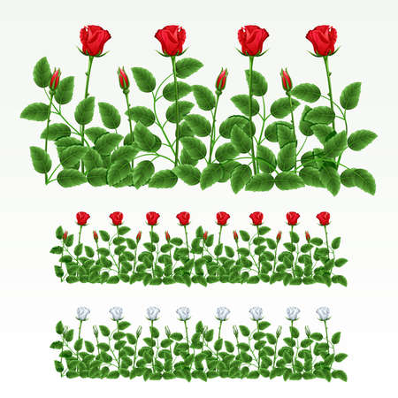 herbaceous border: Border of red and white roses.(can be repeated and scaled in any size)