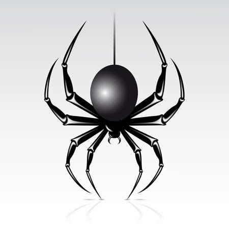 Schwarz Spinne auf weißem Grund. Isoliert.