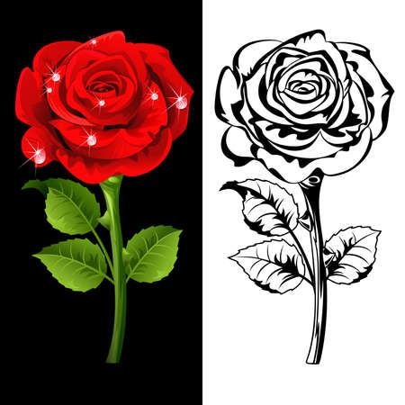Set from  red and white roses. Vector