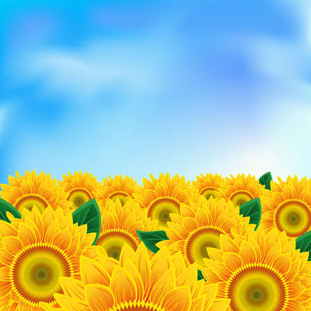 Background with a field of sunflowers and blue sky Illustration