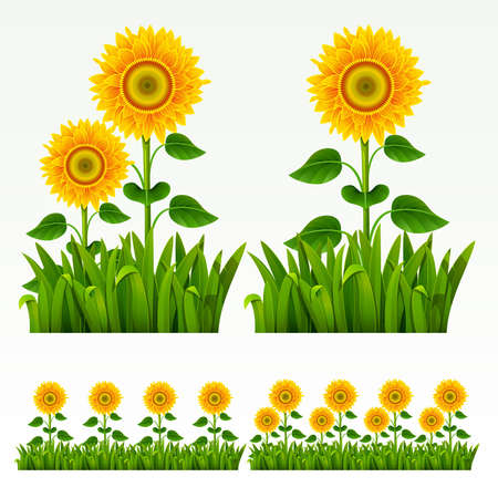 Grass green border with sunflowers. Vector