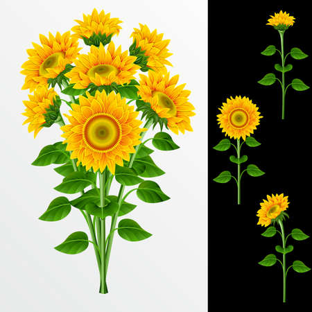 Bouquet from yellow sunflowers  on a white background