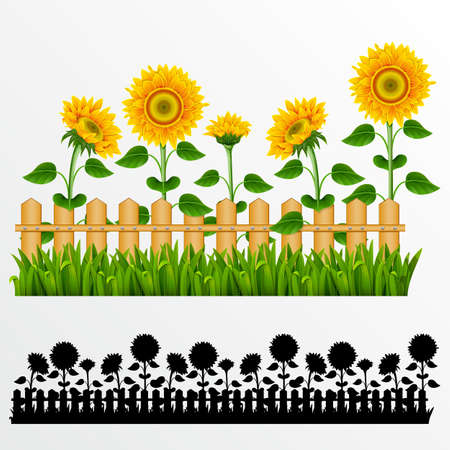 Border with sunflowers and fence.(can be repeated and scaled in any size) Vector