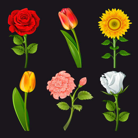cut outs: Collection of flowers of different colors
