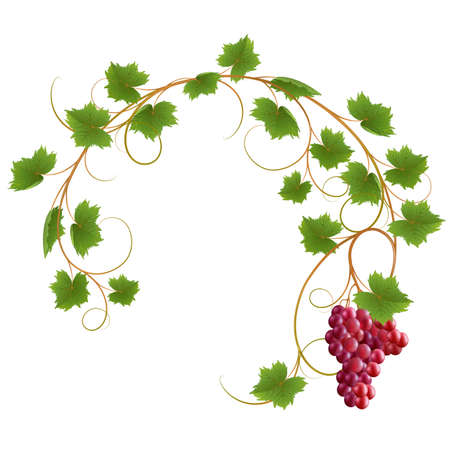 vine leaf: Red vine on a white background