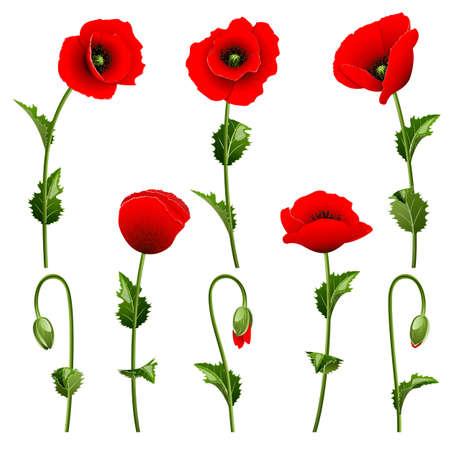 Set aus roten Mohnblumen auf dem weißen Hintergrund