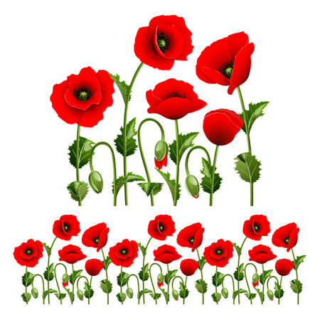 poppy flowers: Border from red poppies  can be repeated and scaled in any size
