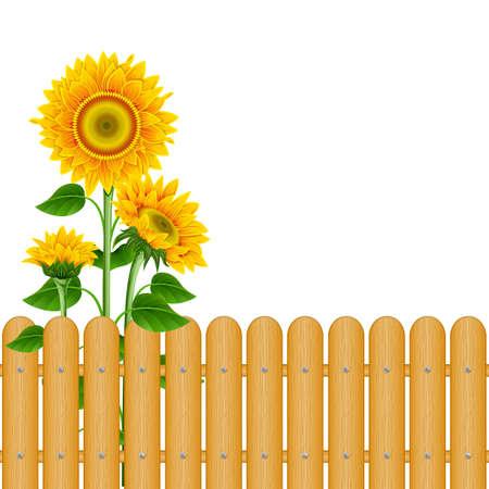 Sonnenblumen und ein Zaun auf weißem Hintergrund Illustration