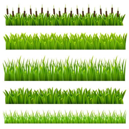 rietkraag: Set van gras van de groene grens kan worden herhaald en geschaald in elke maat