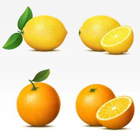 레몬: 흰색 배경에 메쉬에 과일의 컬렉션입니다. 일러스트