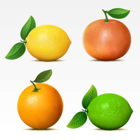 citricos: Colecci�n de frutas en Mesh fondo blanco.