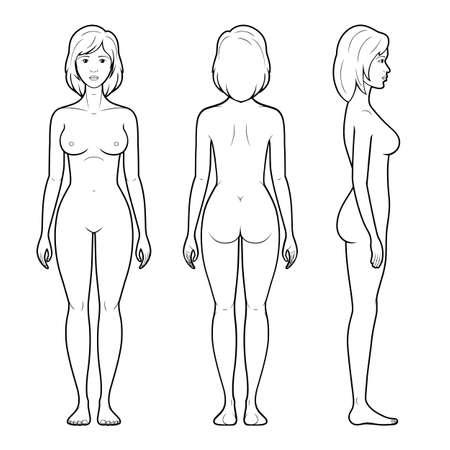 mujer desnuda: Ilustración vectorial de la figura femenina - frontal, posterior y lateral en líneas