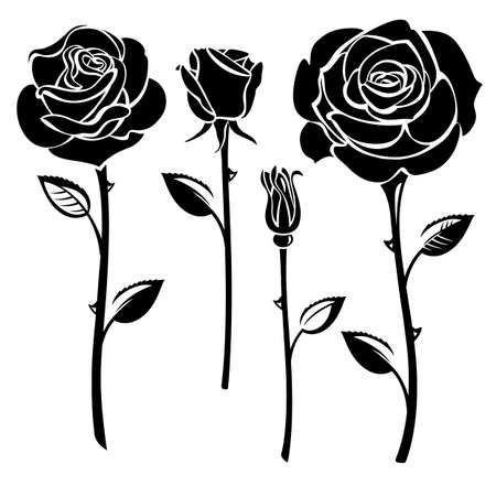 rosebud: Collection of black and white roses Illustration
