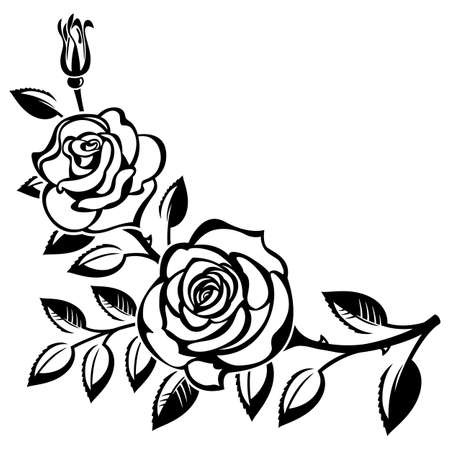 Branch of roses on a white background
