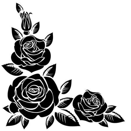 rosebud: Branch of roses on a white background